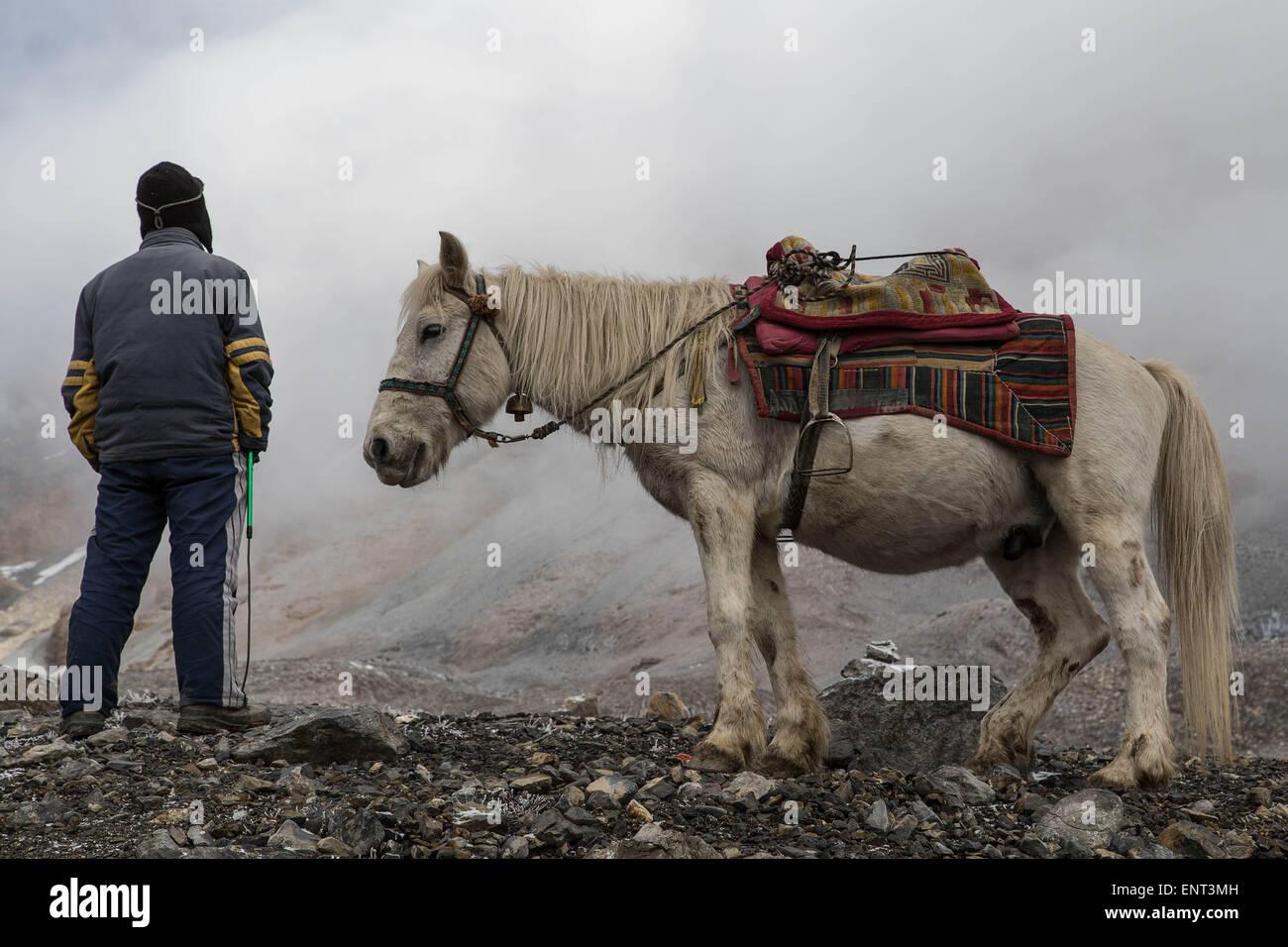 Horse and Horse Man, Annapurna Circuit Trek, Nepal - Stock Image