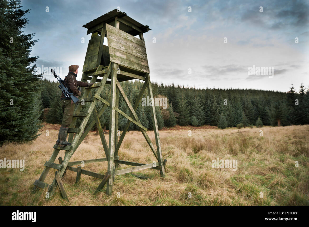 A hunter or deer stalker climbs up a high seat wildlife hide, Scotland, UK - Stock Image