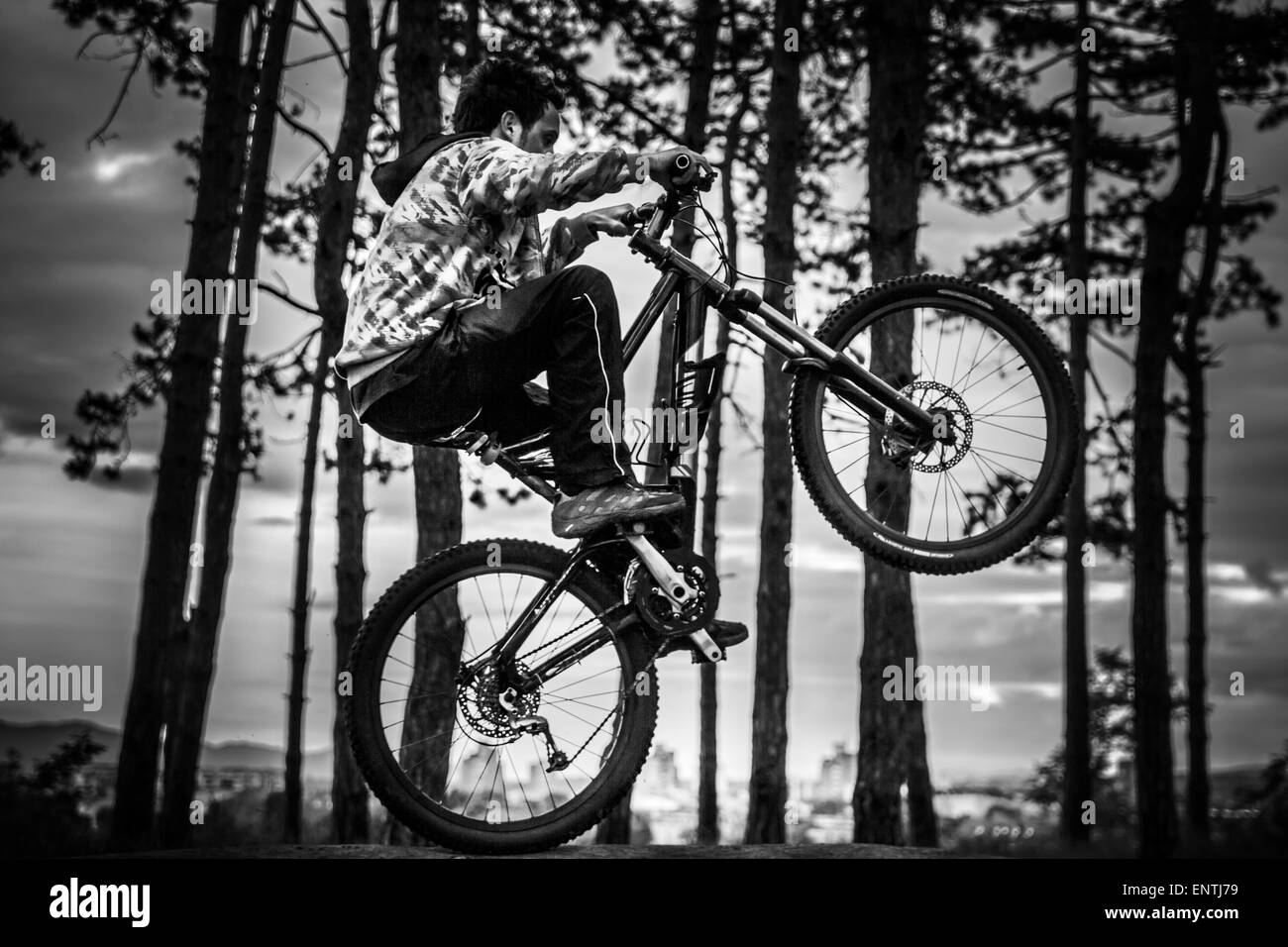 A cyclist rides on the rear wheel in the forest. - Stock Image