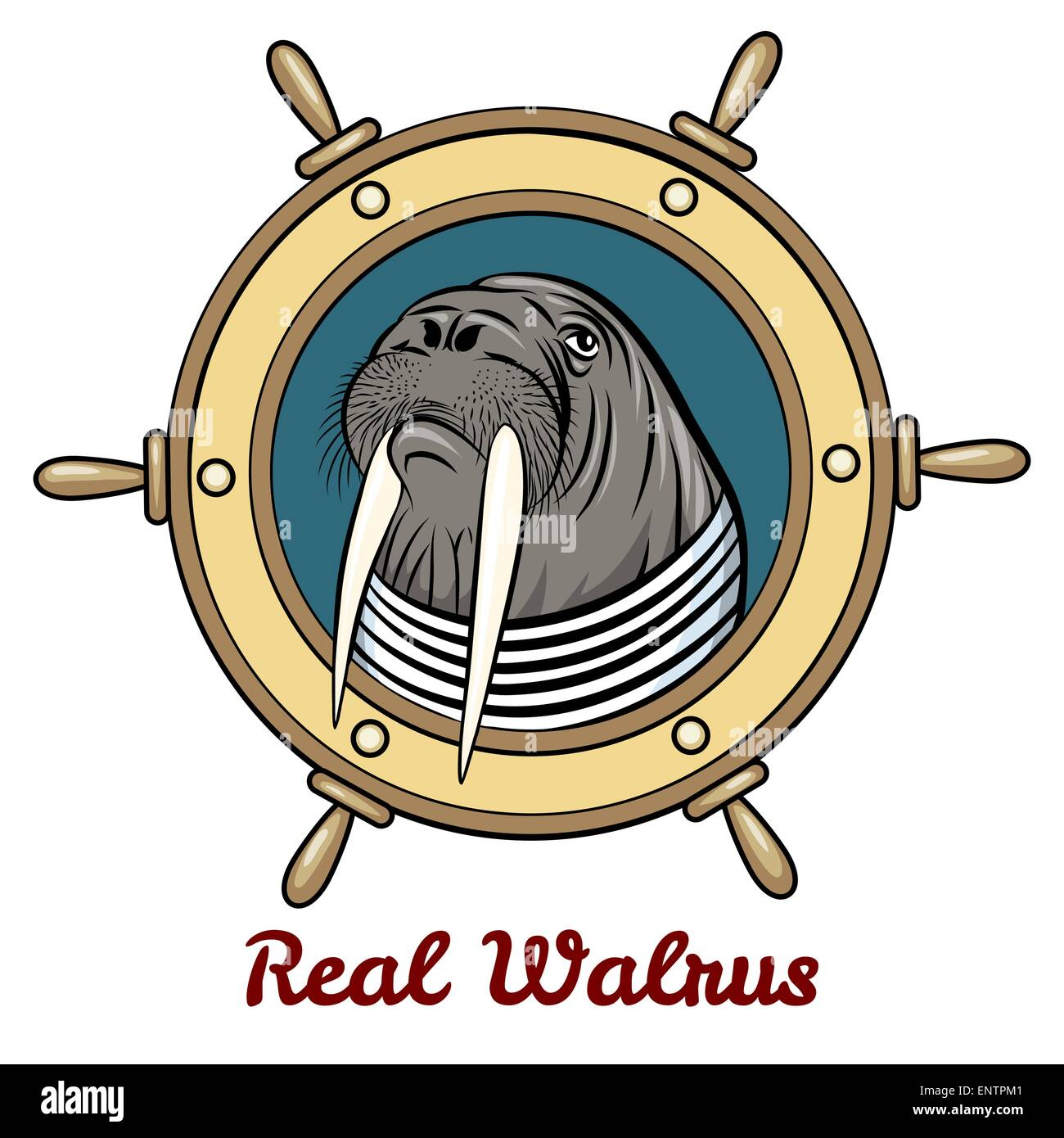 Walrus in seaman shirt against steering wheel drawn in cartoon style. Isolated on white background. Stock Vector
