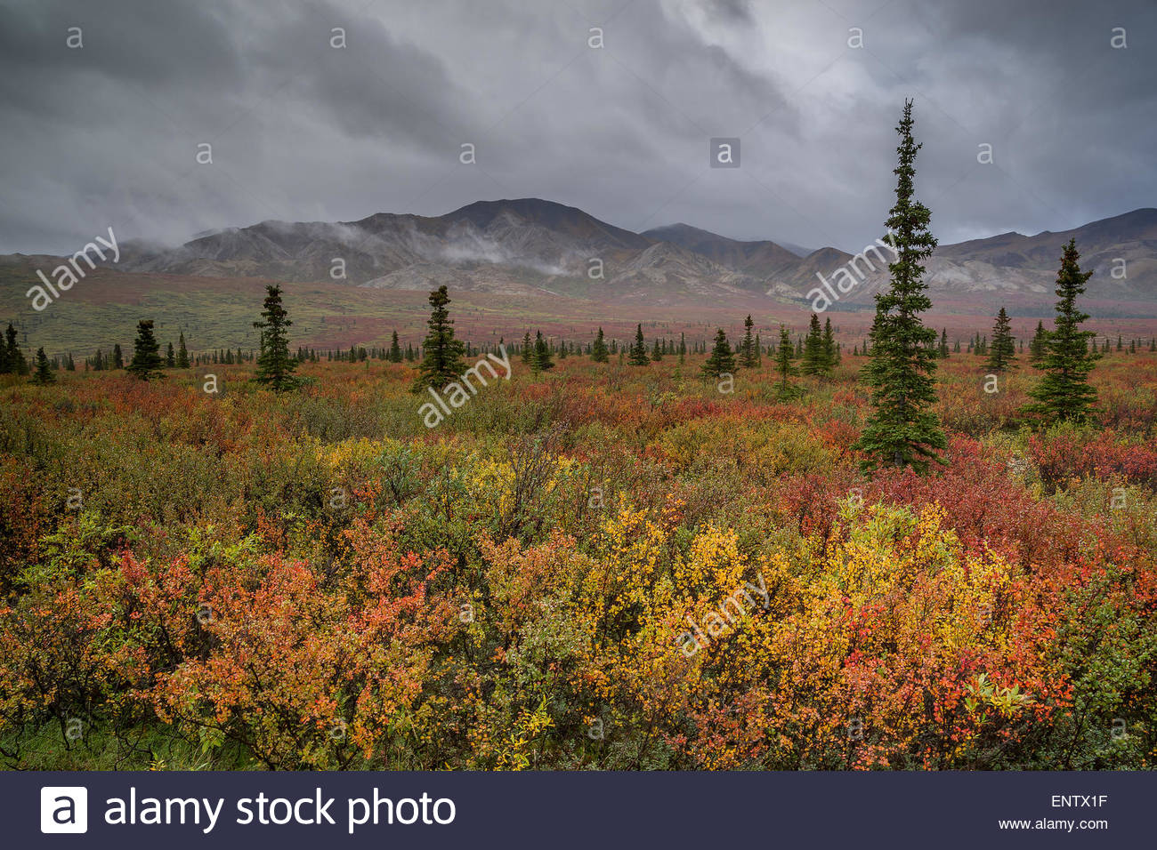 Tundra in Denali national park Alaska Stock Photo