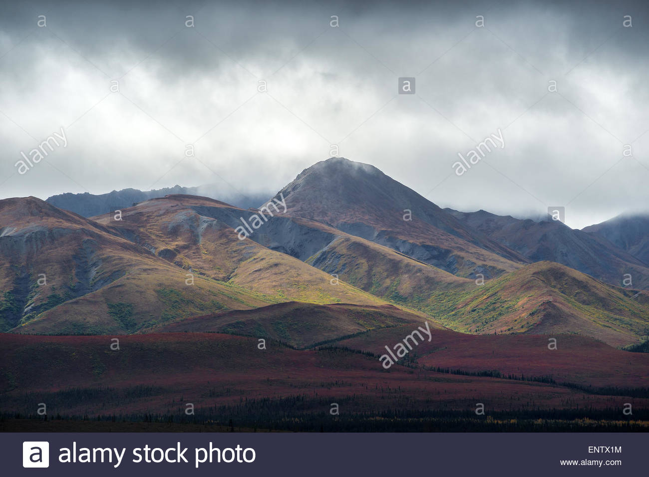 Denali national park Alaska Stock Photo