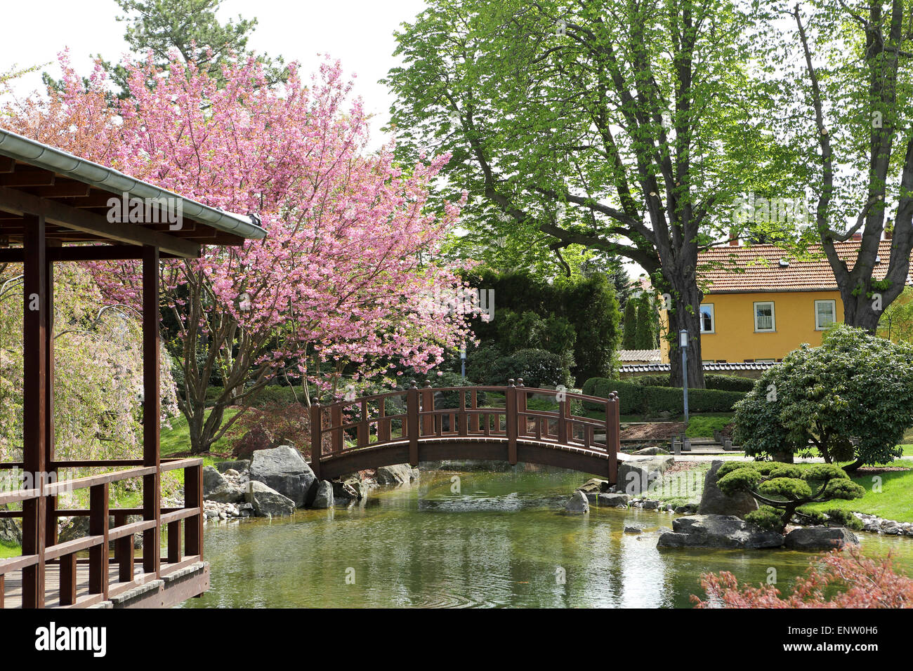 An Arched Bridge By Blossoming Cherry Trees In The Japanese Garden
