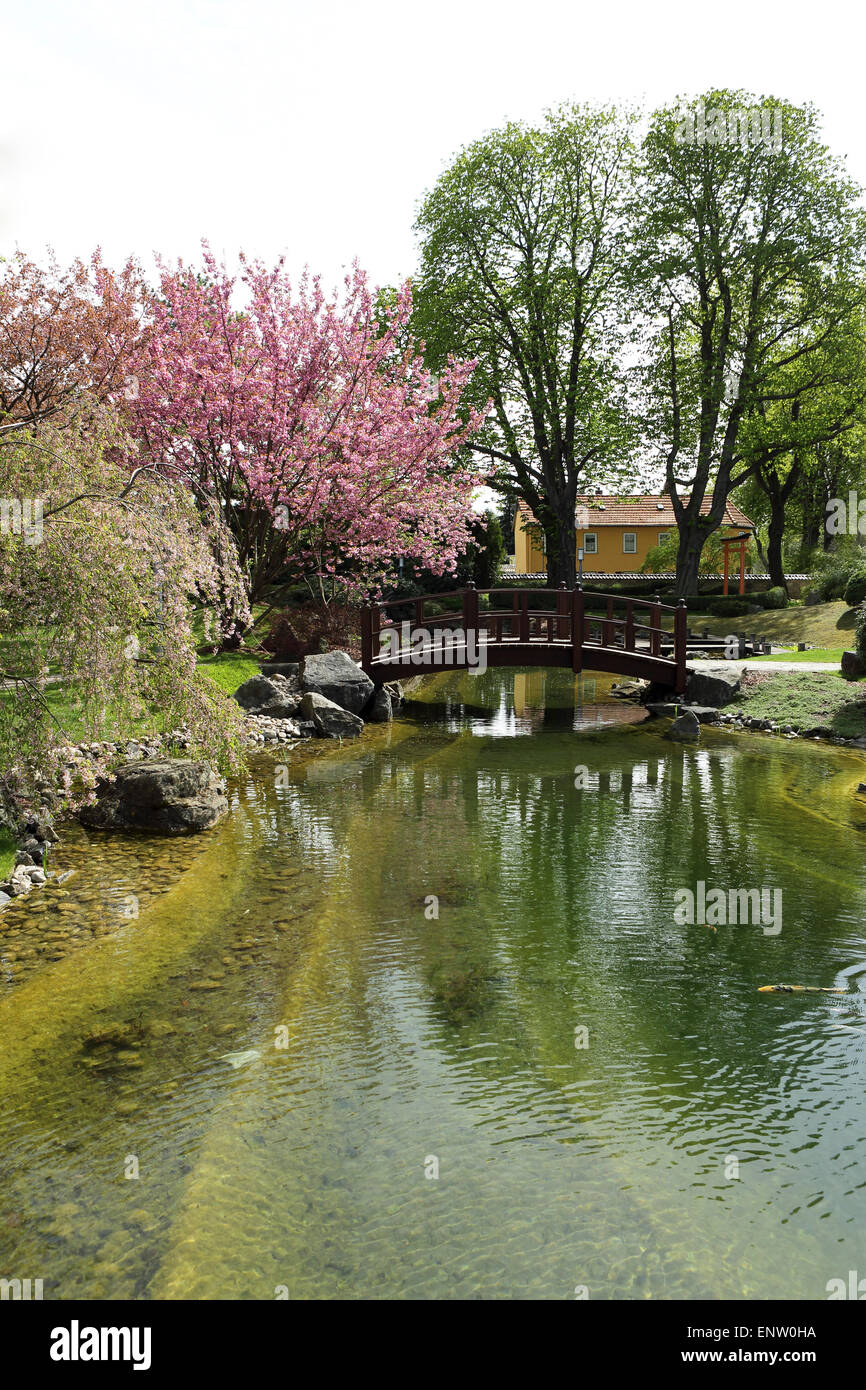 An arched bridge by blossoming cherry trees in the Japanese Garden (Japanischer Garten) in Bad Langensalza, Germany. - Stock Image