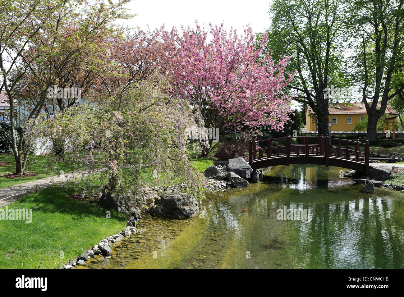 Cherry trees blossom by an arched brdige in the Japanese Garden (Japanischer Garten) in Bad Langensalza, Germany. - Stock Image