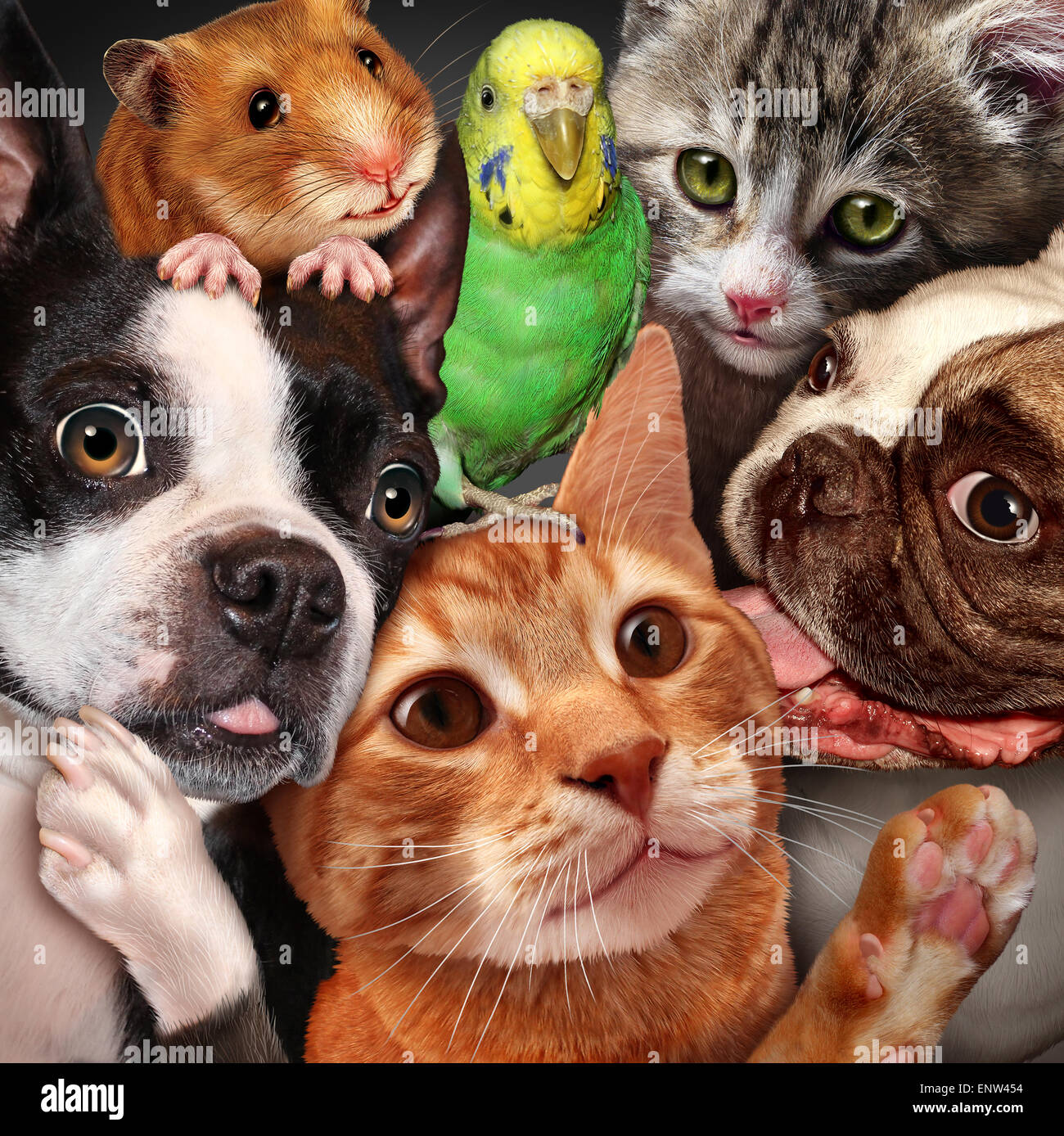 Pet group concept as dogs cats a hamster and budgie gathered together as a symbol for veterinary care and support - Stock Image