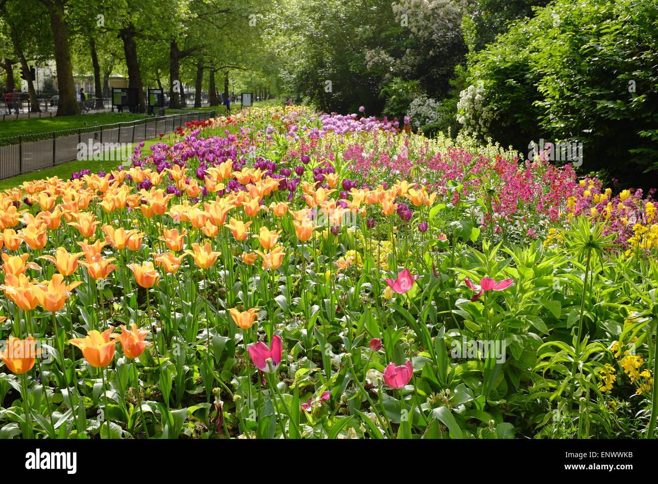 Spring flowers hyde park london uk stock photo 82318191 alamy spring flowers hyde park london uk mightylinksfo
