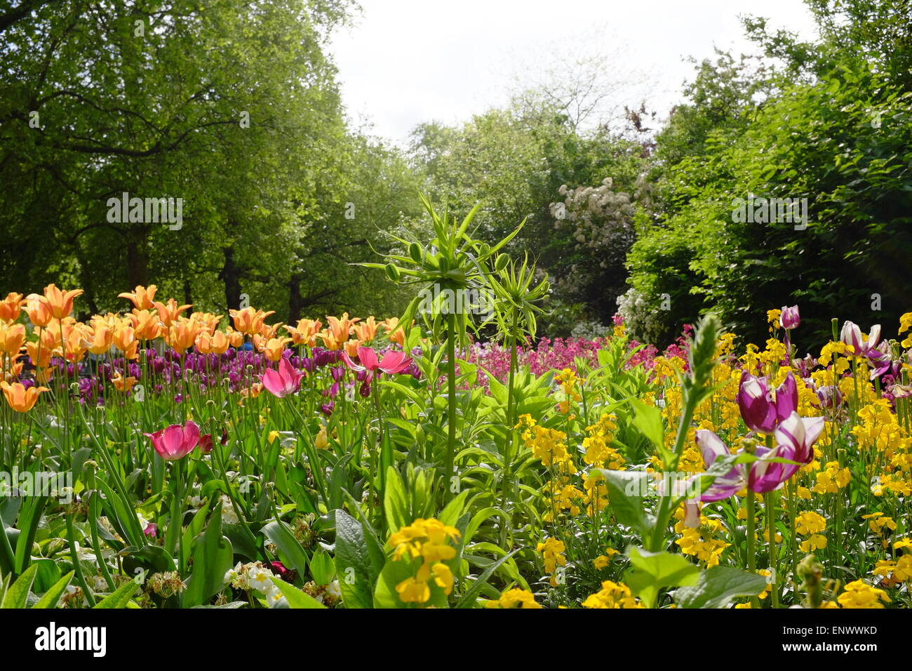 Spring Flowers Hyde Park London Uk Stock Photo 82318193 Alamy