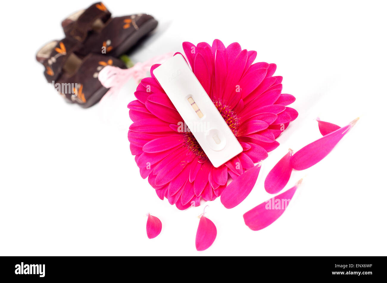 Positive pregnancy test and gerbera - Stock Image