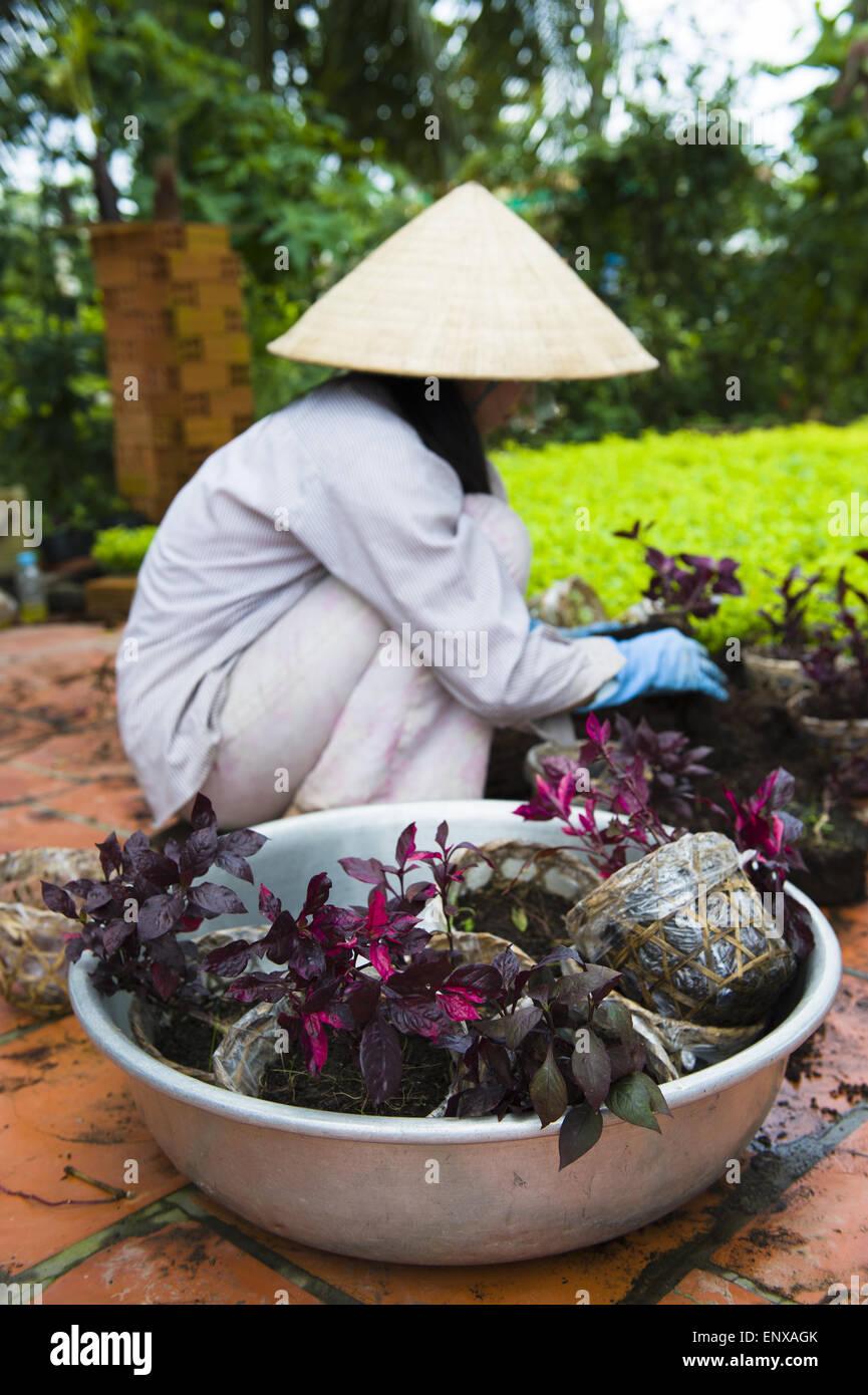 Female gardener - Mekong, Vietnam - Stock Image