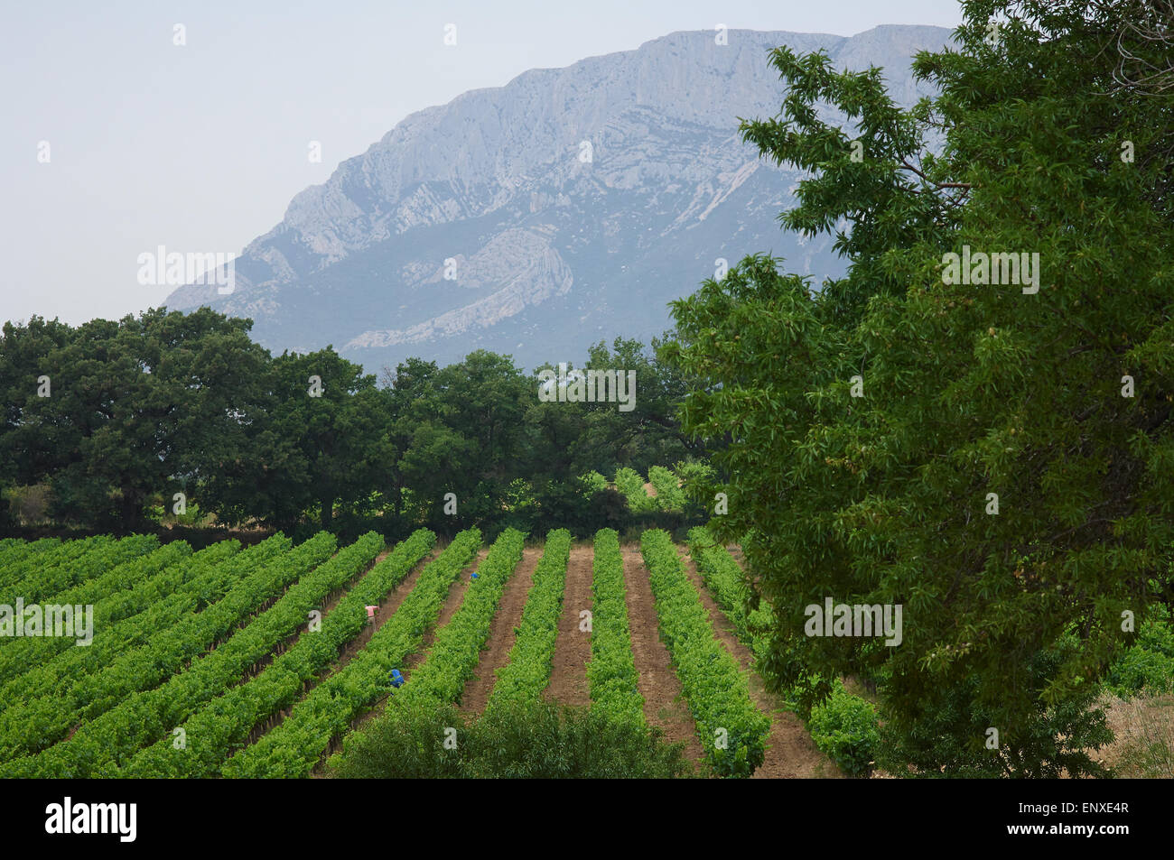 Puyloubier, France the home of the Domaine Danjou a wine produced by retired members of the French foreign legion - Stock Image