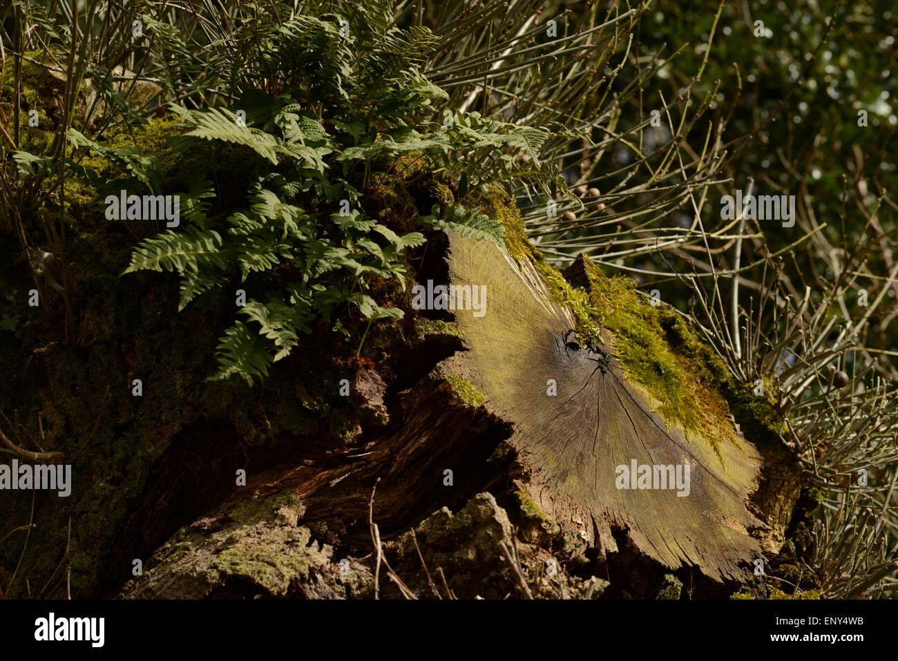 A shot of nature at Bolton Abbey, North Yorkshire - Stock Image