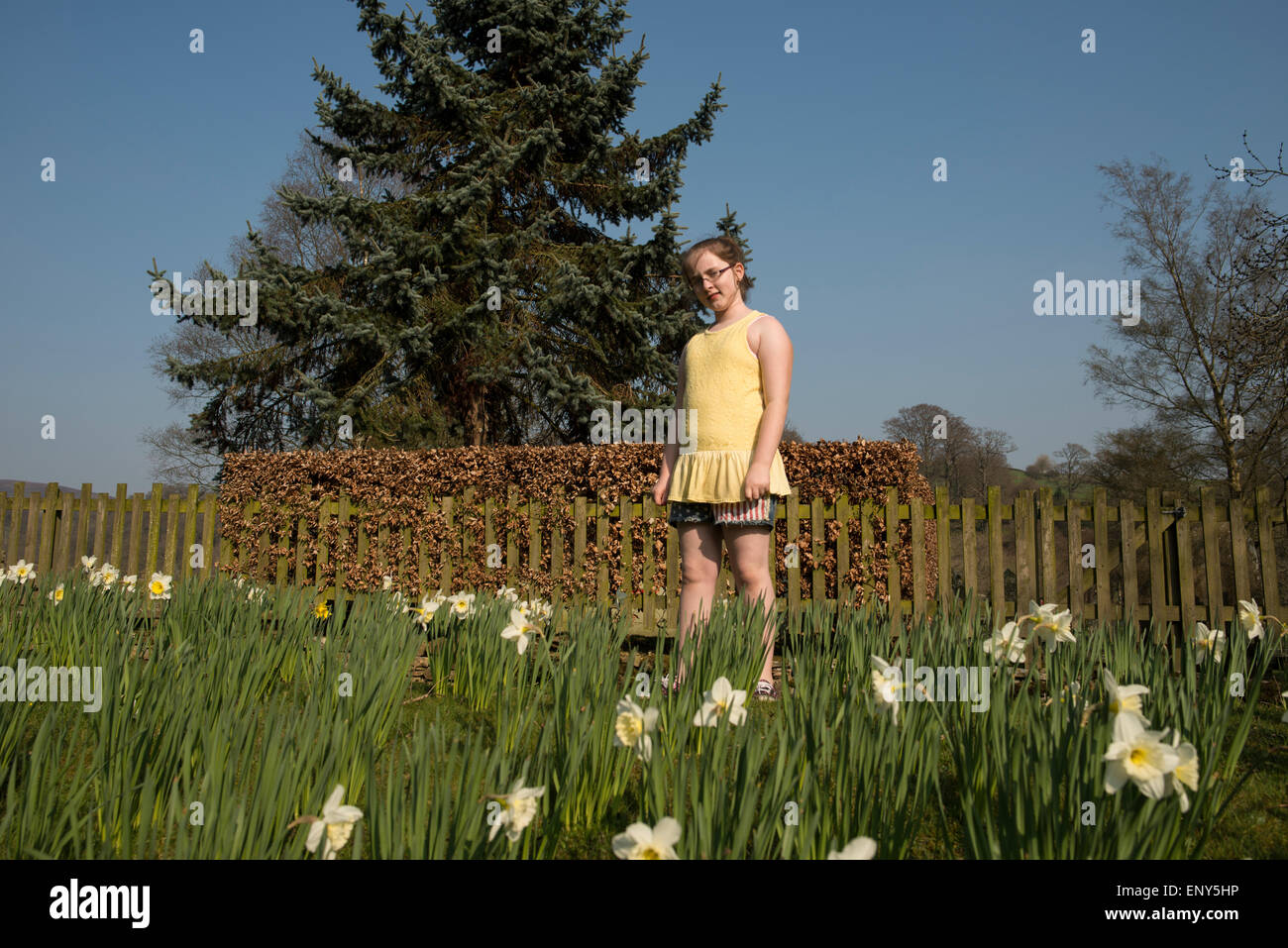 GIRL IN A YELLOW DRESS FEATURED IN THE DAFFODILS AT BOLTON ABBEY - Stock Image