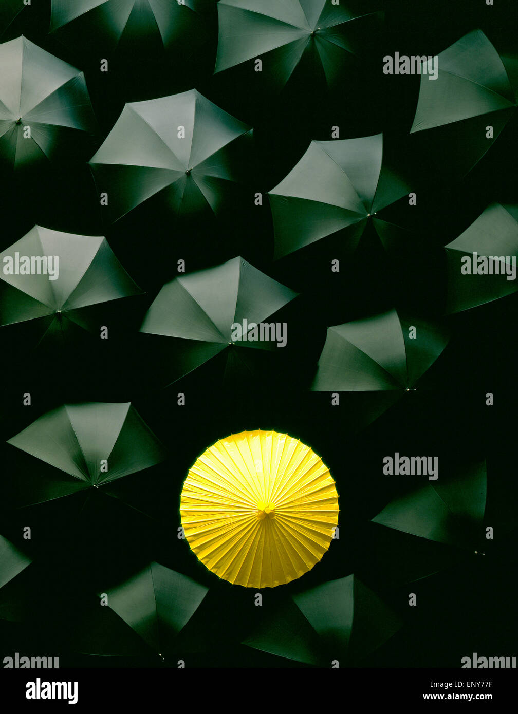 Umbrellas Many black umbrellas and one Yellow umbrella Japanese Chinese Asia - Stock Image