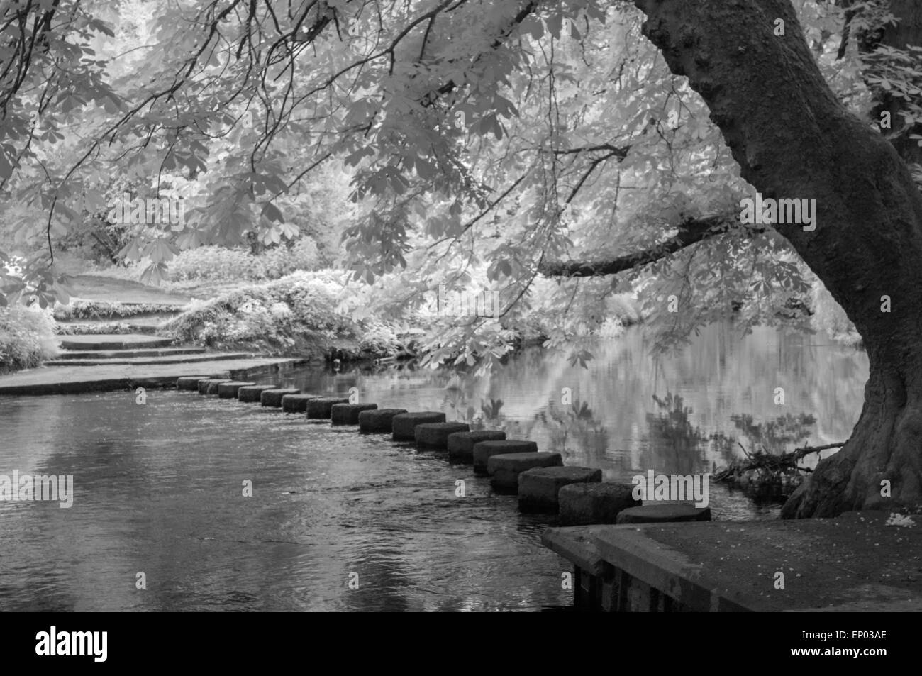 Stepping Stones over River Mole, Surrey, England. Infra-red image. - Stock Image