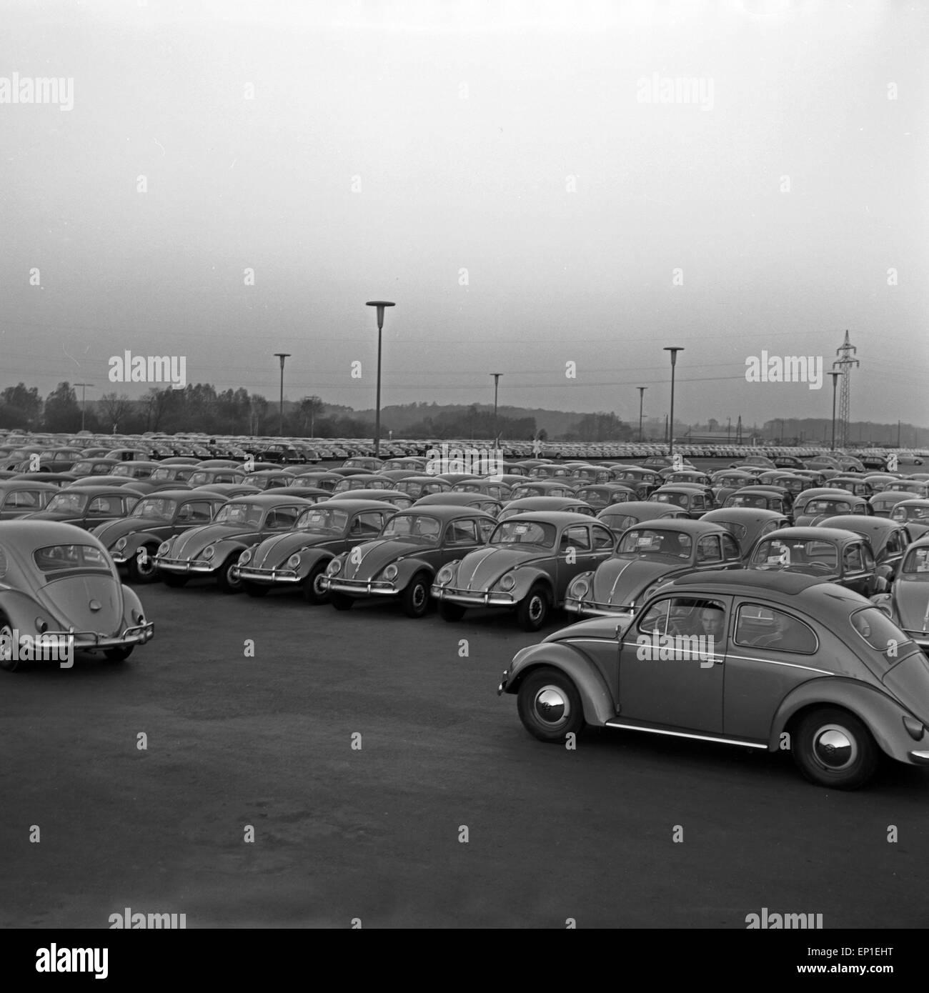 VW Käfer auf Halde produziert im Volkswagenwerk in Wolfsburg, Deutschland 1950er Jahre. New Volkswagen beetles - Stock Image