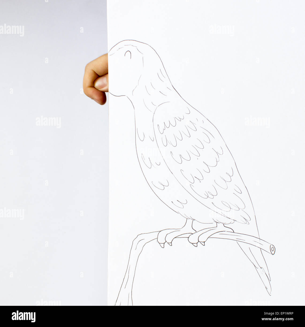 Conceptual parrot Stock Photo