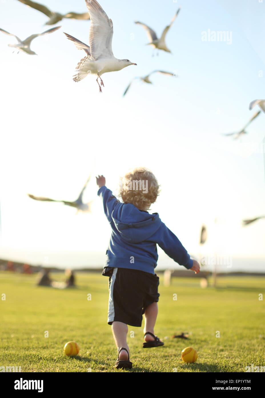 Boy chasing seagulls - Stock Image