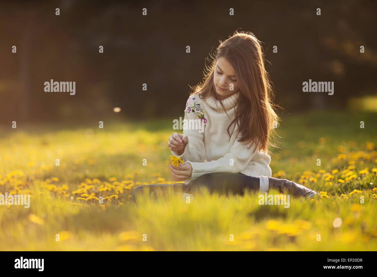 Girl sitting in a field of dandelions picking flowers - Stock Image