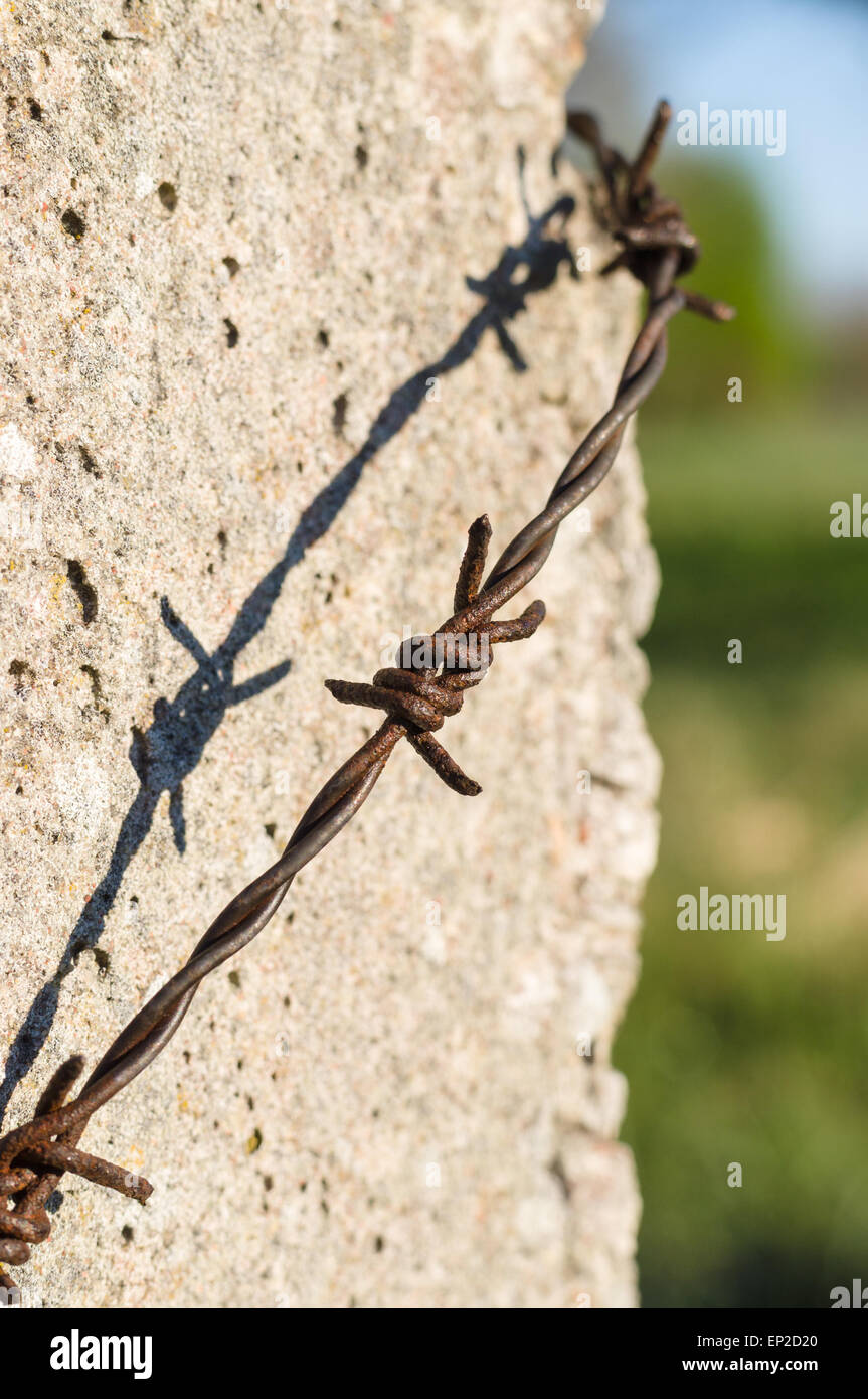 Concrete post with rusty barbed wire Stock Photo: 82418056 - Alamy