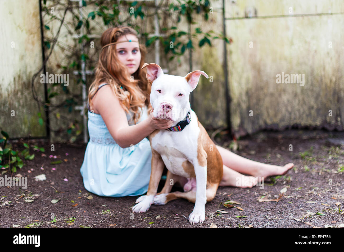 Portrait of a teenage girl sitting outdoors with her pit bull dog - Stock Image