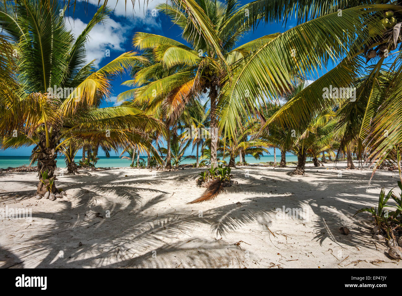 Palm trees on beach, Punta Xochen near Champoton over Bay of Campeche, Gulf of Mexico, Campeche state, Mexico Stock Photo