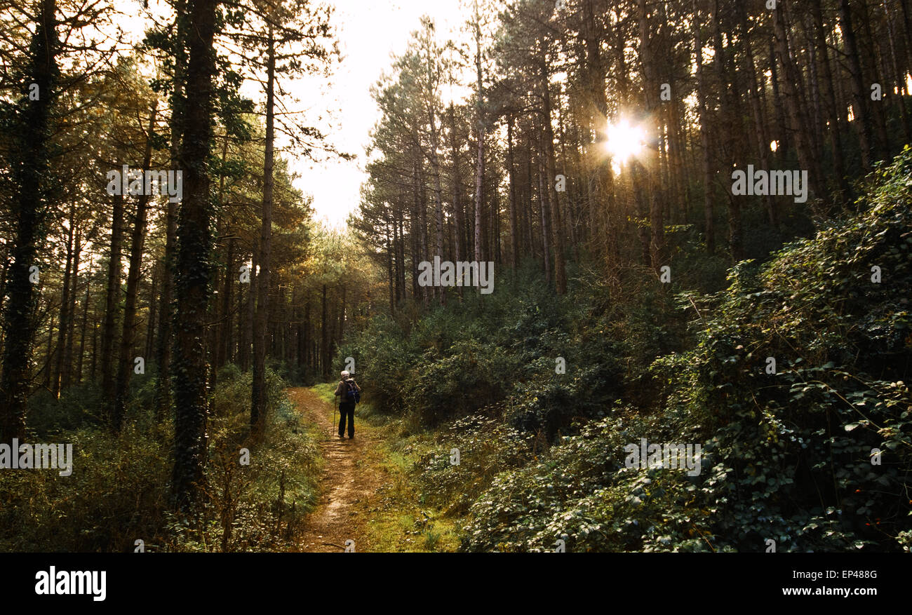 Senior man hiking in a forest, Spain - Stock Image