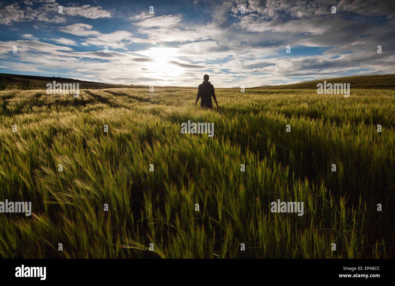 Rear view of a man standing in a green field at sunset - Stock Image