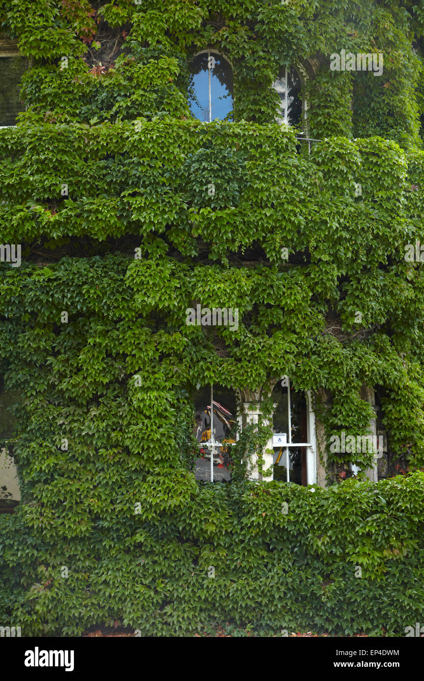 Historic Northern Club building covered in Virginia Creeper, Auckland, North Island, New Zealand - Stock Image