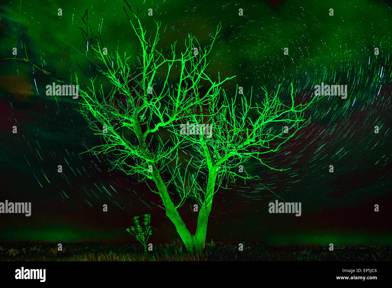 Alone tree on night sky with stars, startrails in unusual green light - Stock Image
