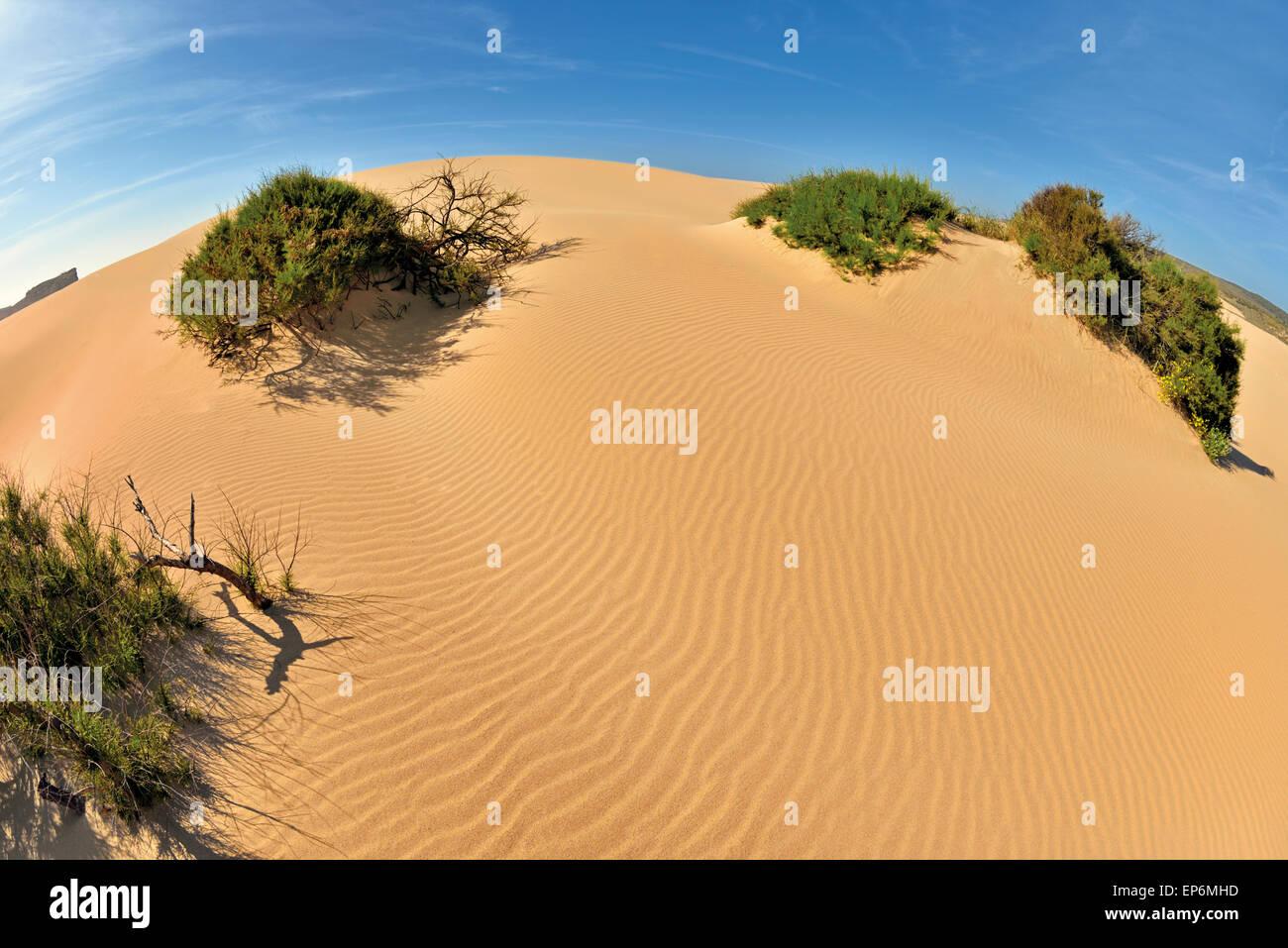 Portugal, Algarve: Sand dune with coastal vegetation in Carrapateira - Stock Image