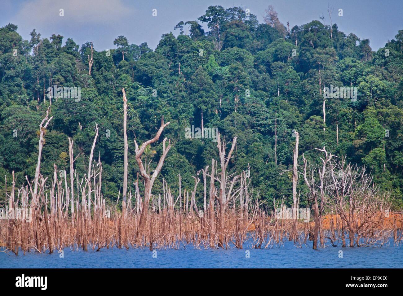 Kenyir lake, Pahang, Malaysia, submerged trees after flooding for a dam. Tasik Kenyir or Kenyir Lake is an artificial - Stock Image