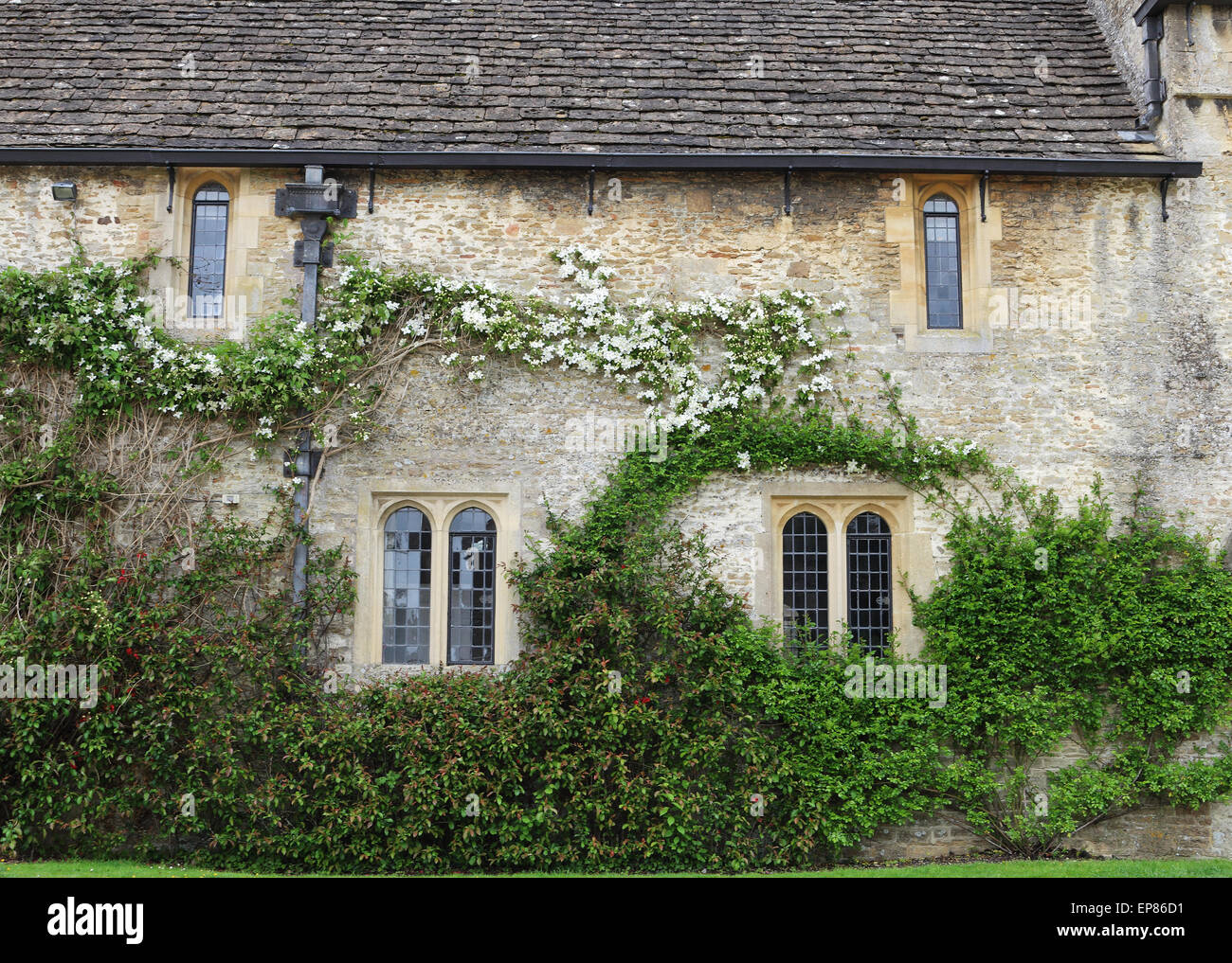 Medieval English Manor with mullion windows and climbing plants on the wall - Stock Image