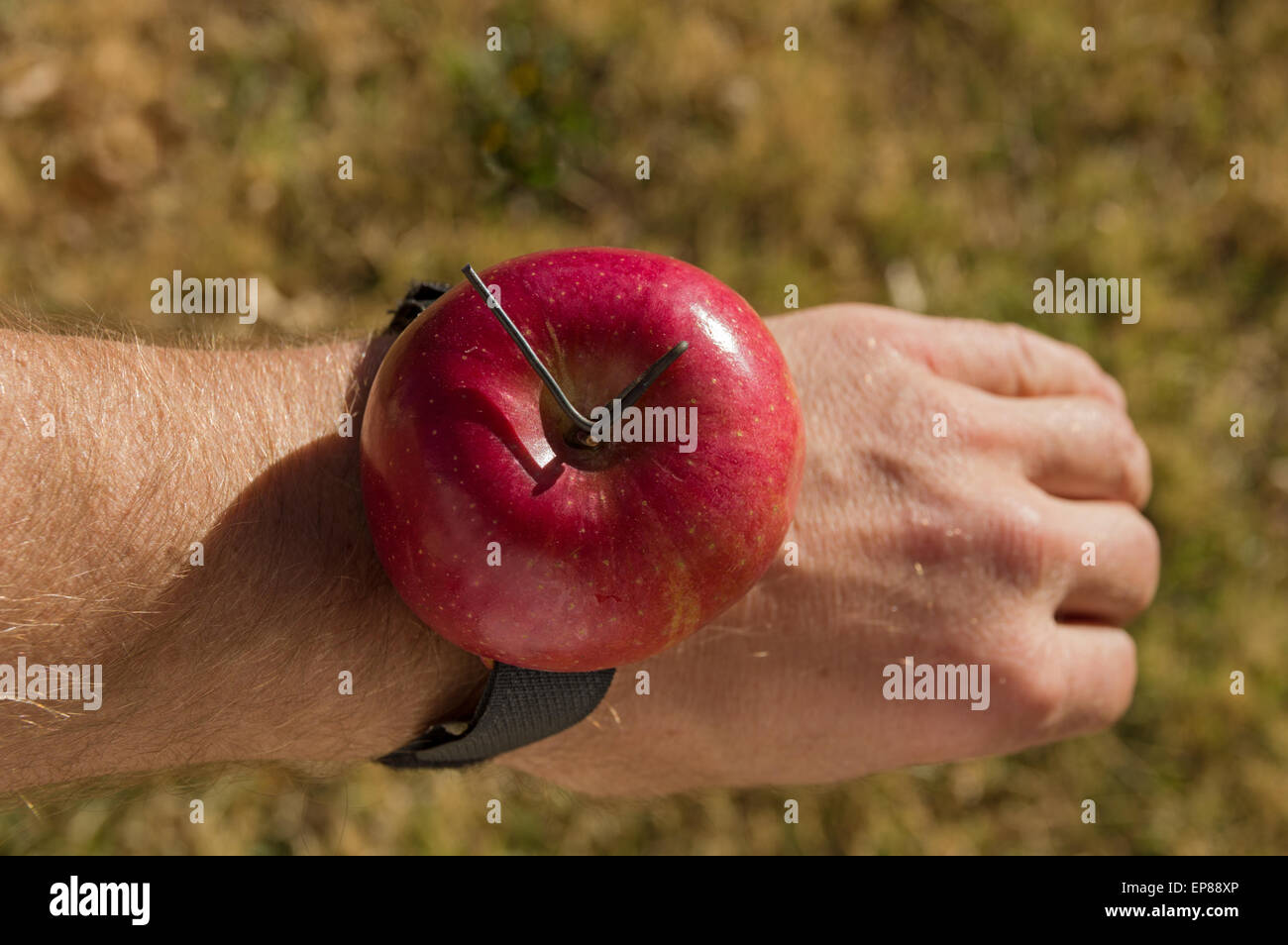0d879a5cf6 a joke redneck apple watch made out of a red apple strapped to a wrist -