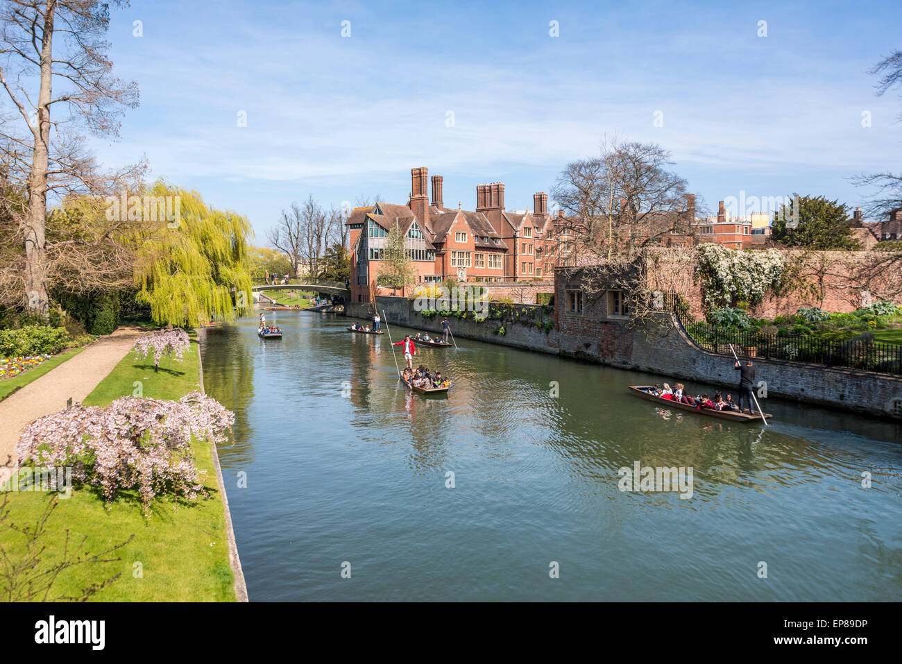 Punting on the River Cam in Cambridge England takes in the famous Backs, here the back of Trinity College can be - Stock Image