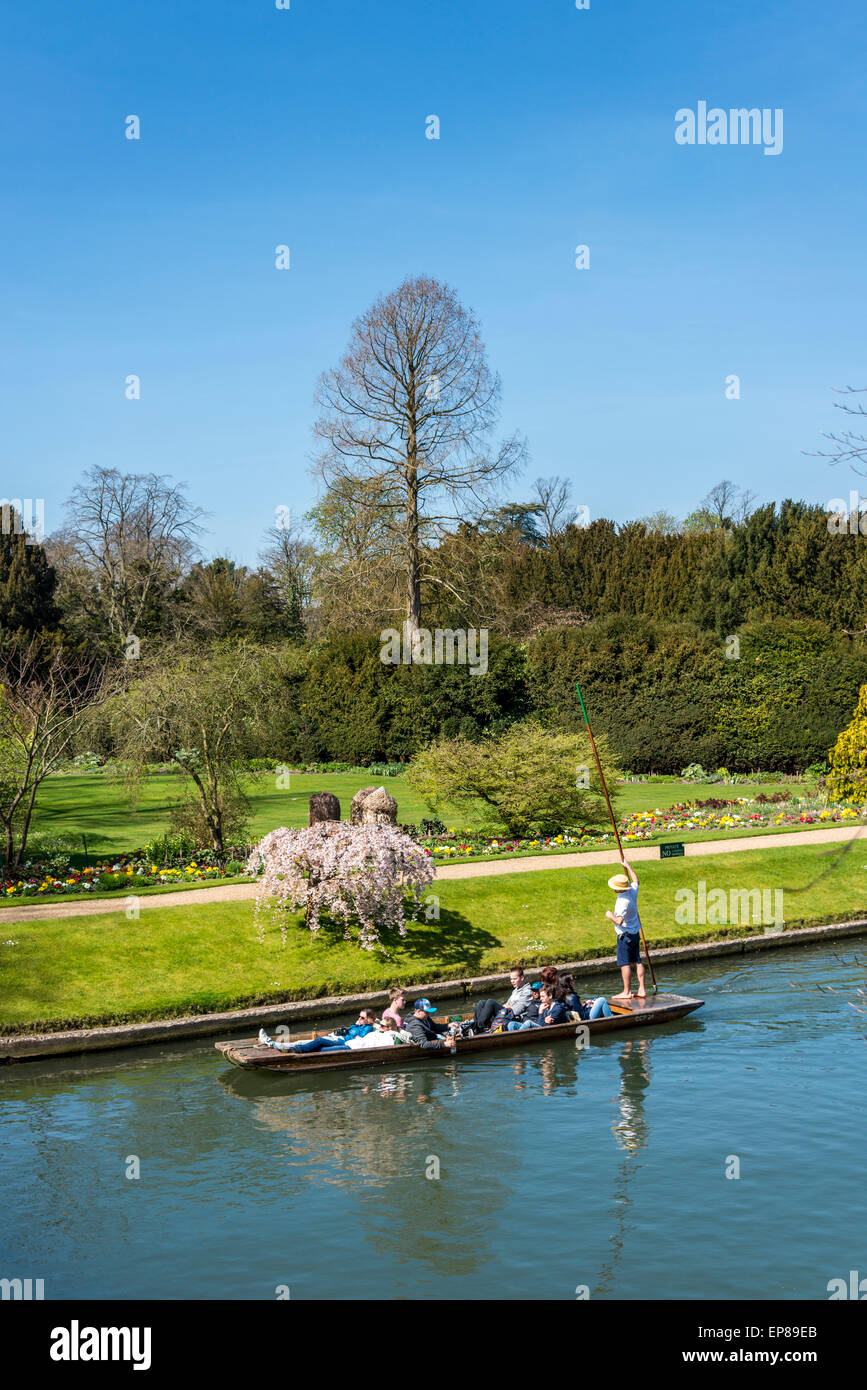 Punting on the River Cam, Cambridge passing by the Fellow's Garden of Clare College seen from 'the backs' - Stock Image