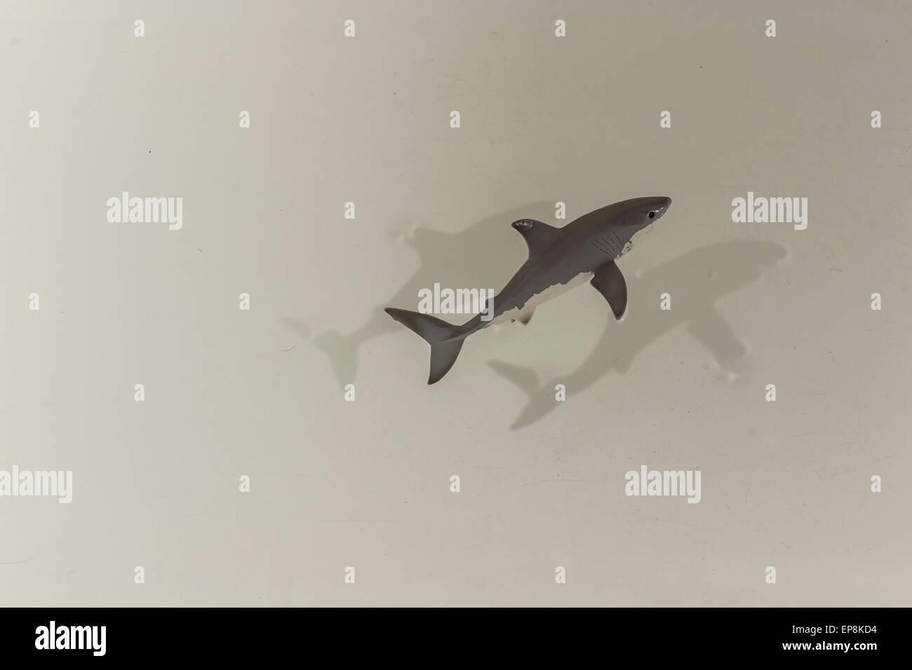 Hammerhead Shark Pos | Shark On White Background Stock Photos Shark On White Background