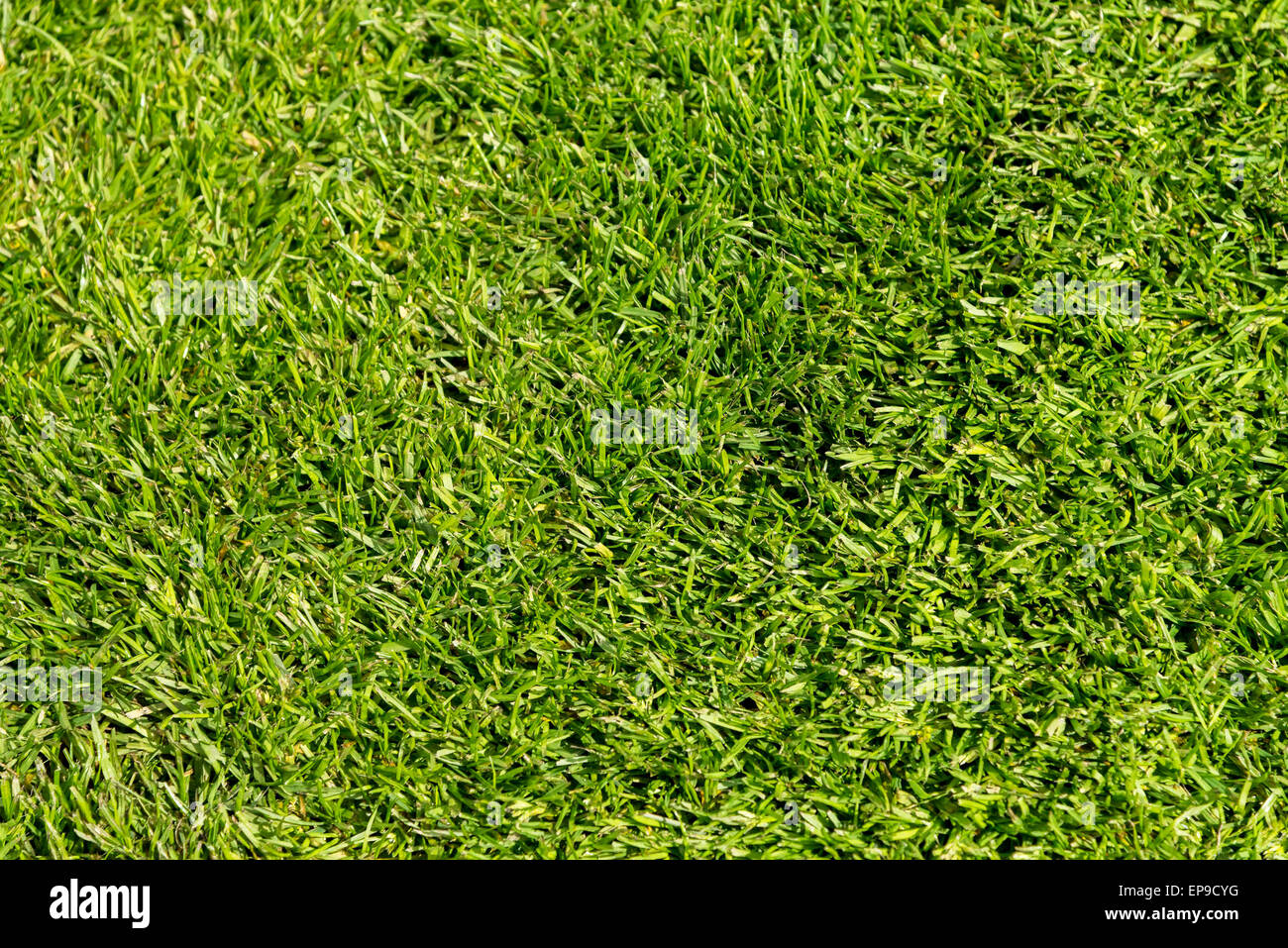 Green Grass Lawn - Stock Image