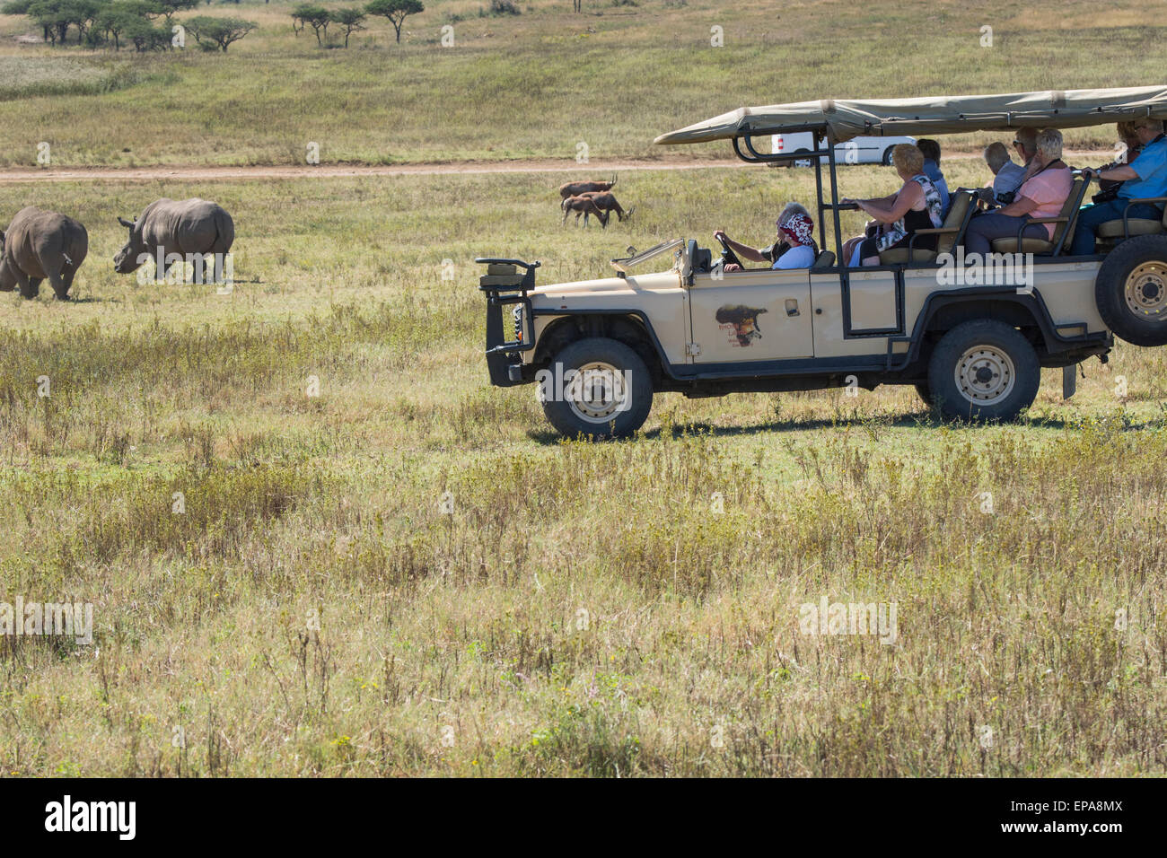 South Africa, Durban. Tala Game Reserve. Tourists in safari jeep watching white rhino (WILD: Ceratotherium simum). - Stock Image