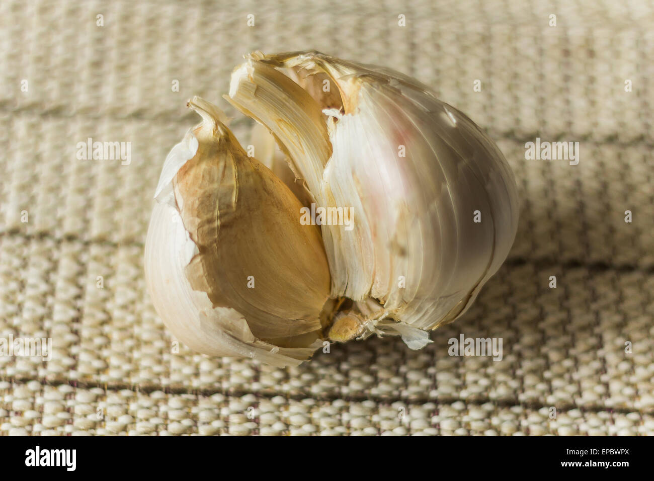 Extra large elephant garlic with moody lighting for farmers background photo - Stock Image