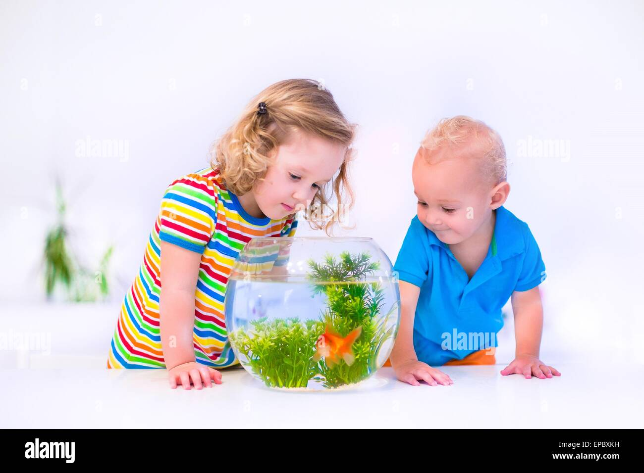 Two children, brother and sister, cute little girl and adorable baby boy feeding a goldfish swimming in a round - Stock Image