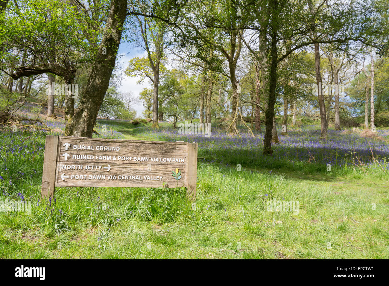 Bluebells and footpath sign on the Scottish island of Inchcailloch on Loch Lomond - a short ferry ride from Balmaha, - Stock Image