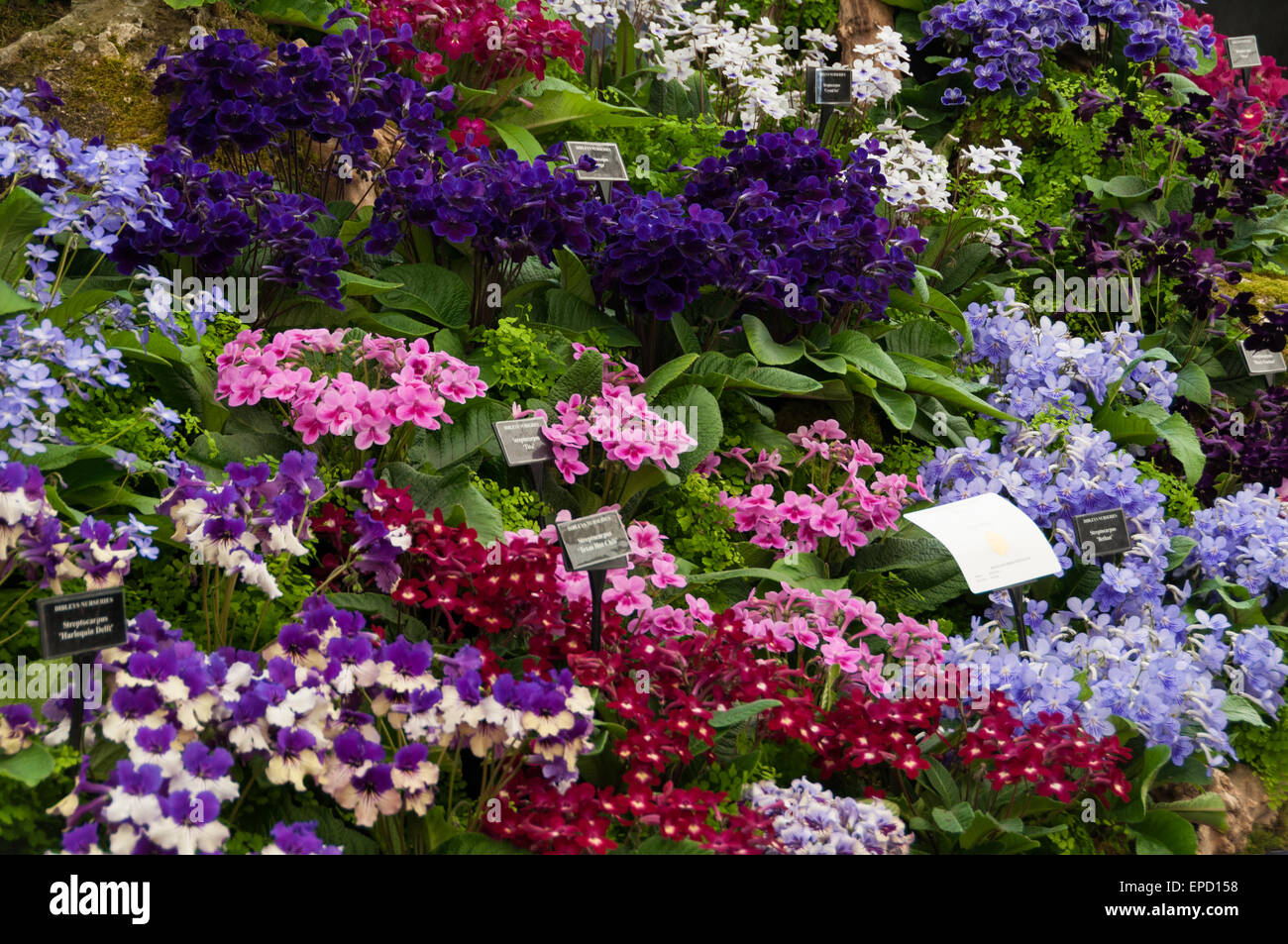 Royal Horticultural Society (RHS) Malvern Spring Festival, 9th May 2015 Stock Photo