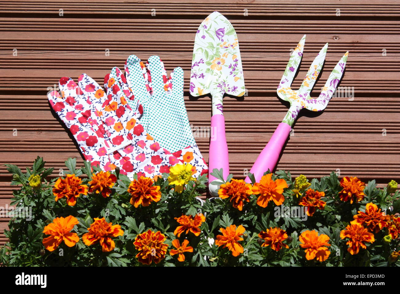 Marigold plants with gloves and garden tools Stock Photo