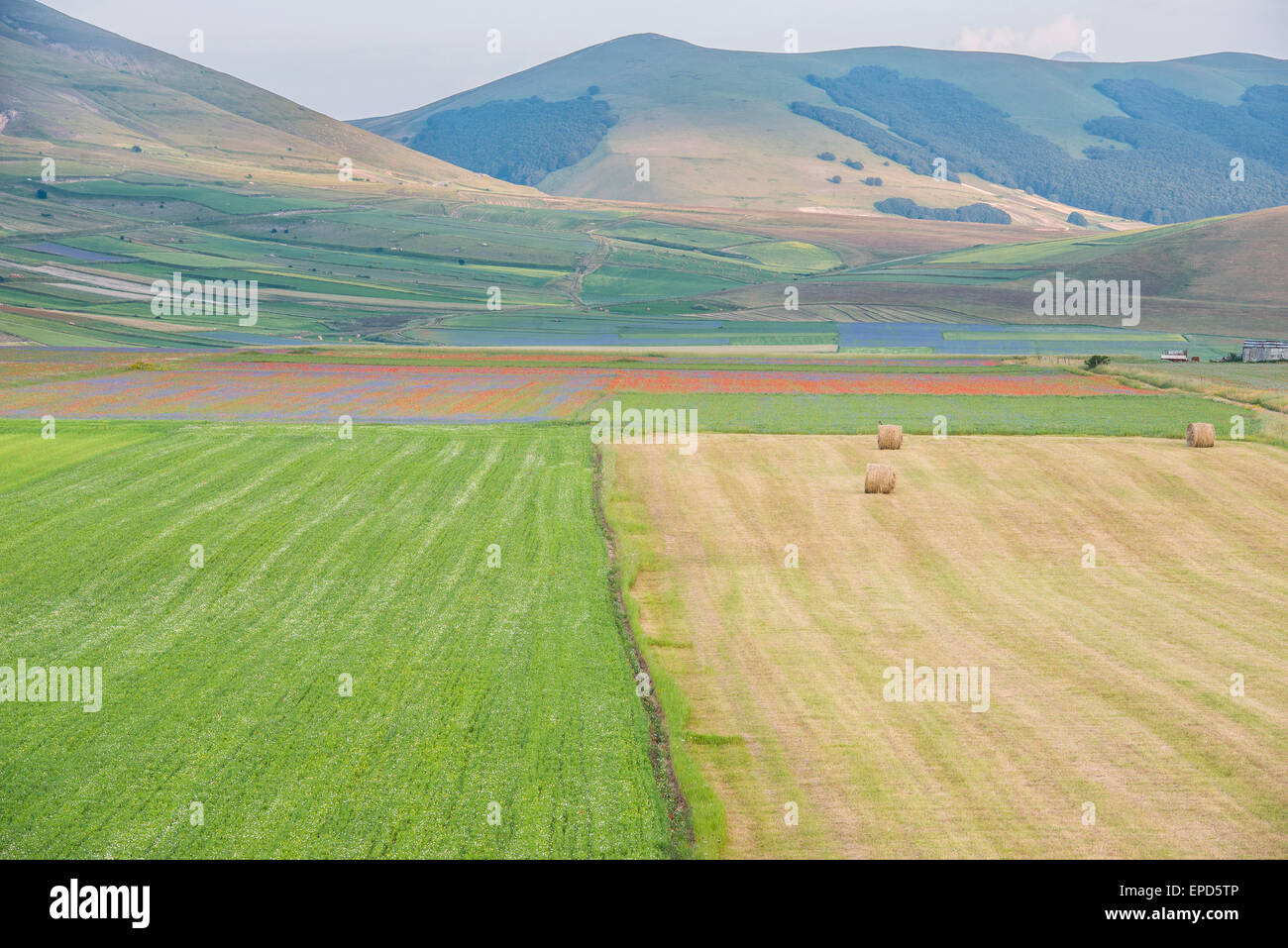 Colored fields with bales in Piano Grande, Monti Sibillini NP, Umbria, Italy - Stock Image