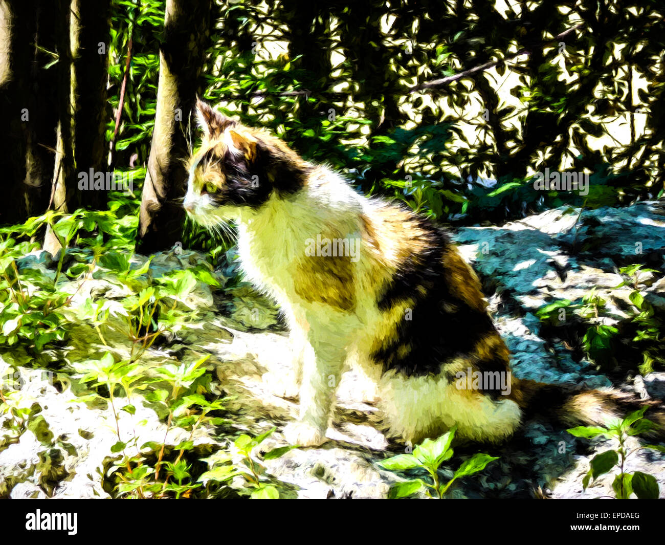 Domestic cat lying in the garden - Painting effect - Stock Image