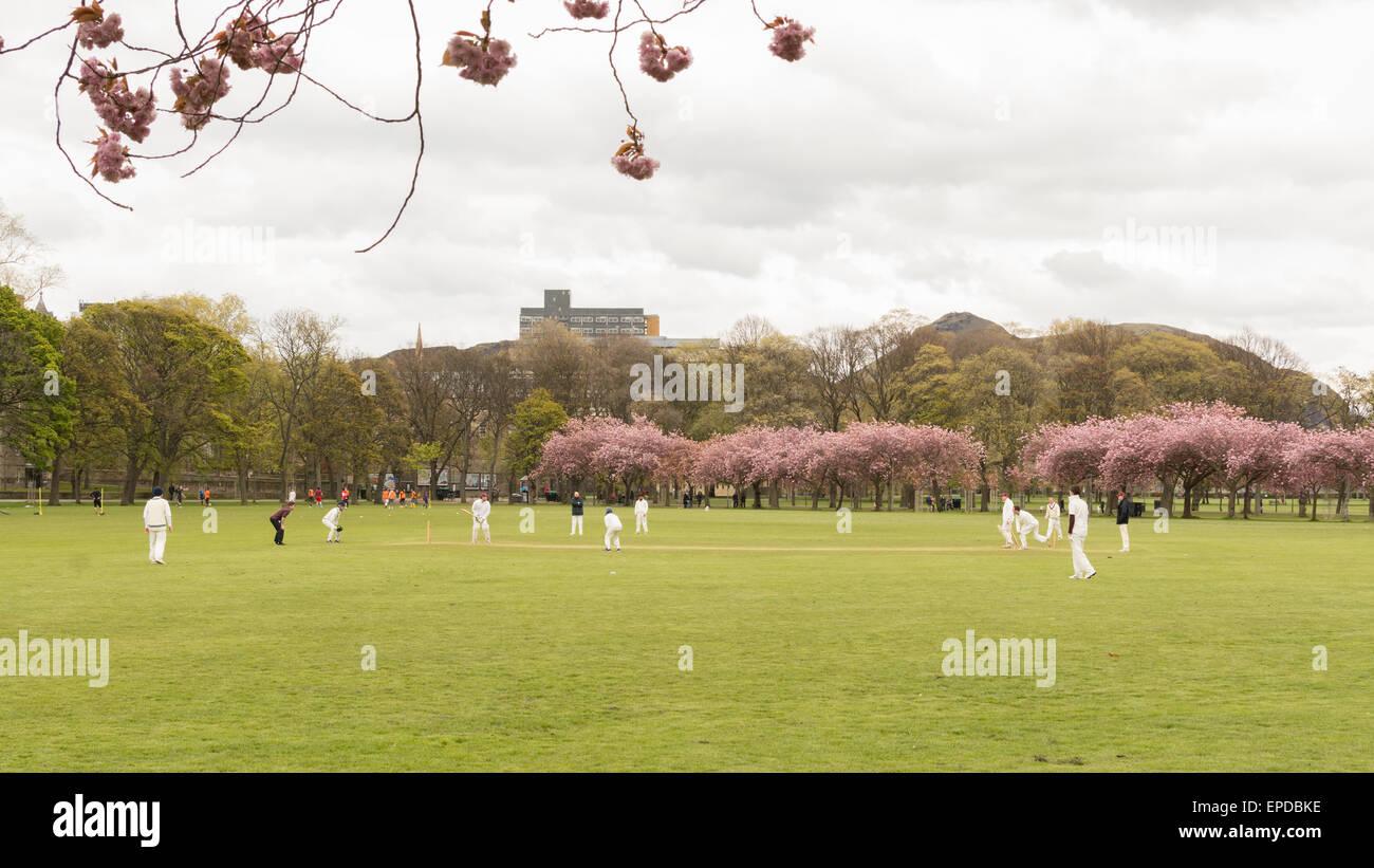 Spring cricket match being played in The Meadows public park, Edinburgh, Scotland, UK beneath Arthur's Seat - Stock Image
