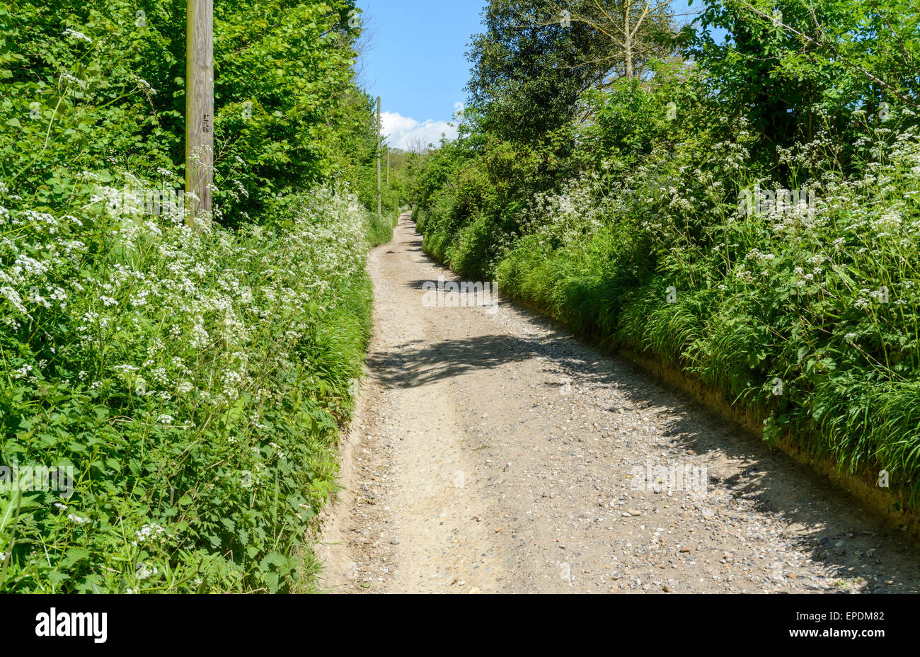 Narrow country lane in England, UK. - Stock Image