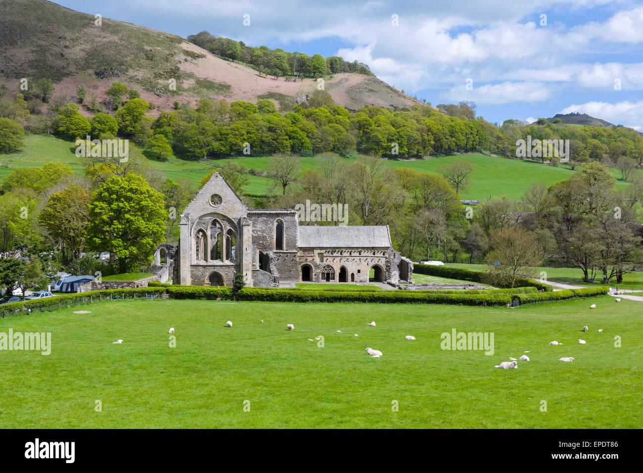 Valle Crucis Abbey, near Llangollen, Denbighshire, Wales, UK Stock Photo