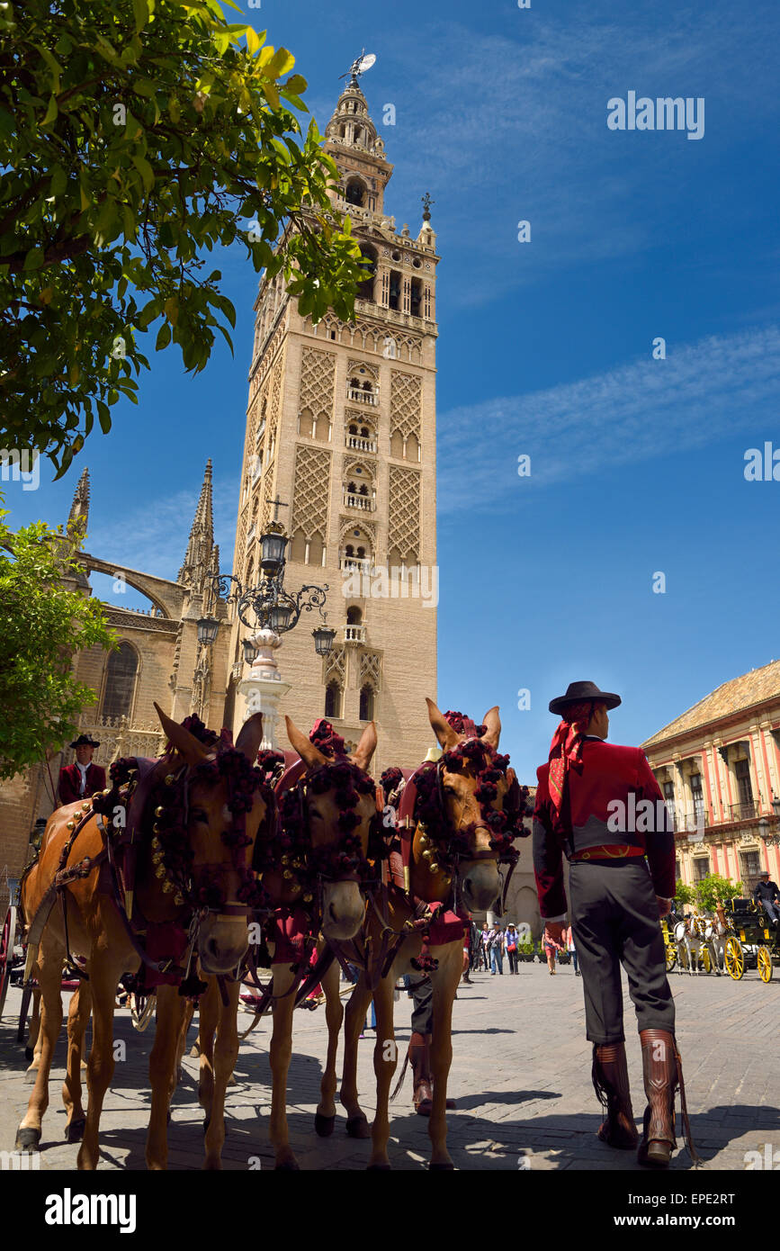 La Giralda bell tower of the Seville Cathedral with mule drawn carriage drivers Andalusia - Stock Image